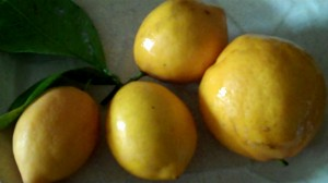 Meyer lemons from my parents' yard