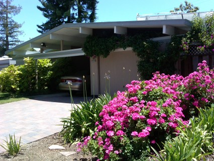 A splash of color in front of an Eichler in the Fairgrove neighborhood, Cupertino