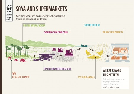 Soya and the Cerrado graphic