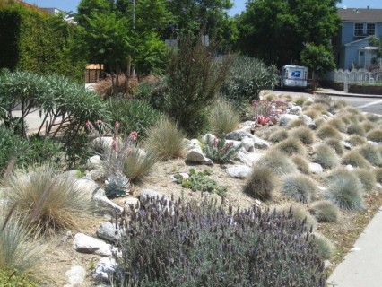 volunteers and some plants are what you need to transform old medians and concrete patches
