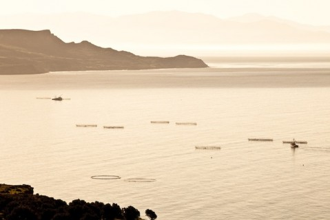 Salsipuedes Concession, Baja California, location of sustainable aquaculture