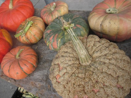 a colorful assortment of Michigan pumpkins