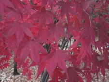 fall colors offer privacy in various corners of Jongmyo