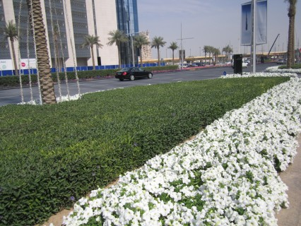 More annual flowers on the road median in front of Dubai Mall and Burj Khalifa