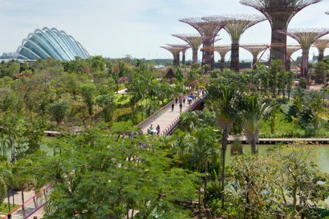supertrees, gardens by the bay, singapore, water efficiency, solar, southeast asia, multimedia, travel