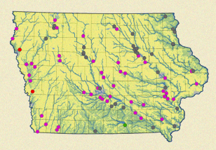 Iowa, water quality, water pollution, nitrates, phosphorous, Leon Kaye, Environmental Working Group, EWG, farming, agribusiness, agriculture