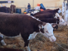 The Global Effort to Make Beef More Sustainable