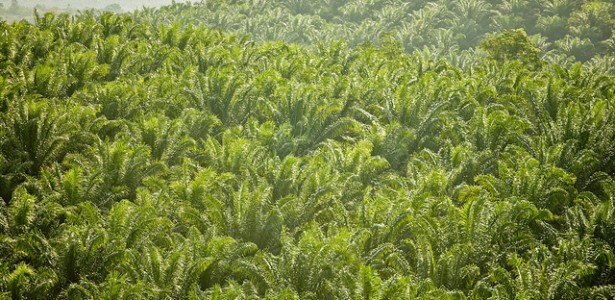 Cargill Suspends Palm Oil Contracts with Controversial Producer
