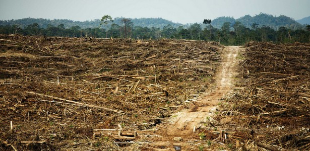 As Palm Oil Abuses Widen, WWF Releases Global Scorecard