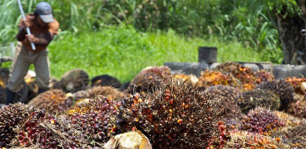 Amnesty International: Child Labor Continues in Indonesian Palm Oil