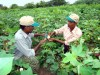 UK Study: Fair Trade Cotton 1/5 Ecological Impact of Conventional Textiles