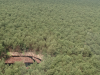 The Pulp and Paper Industry Can Play A Role in Stopping Deforestation