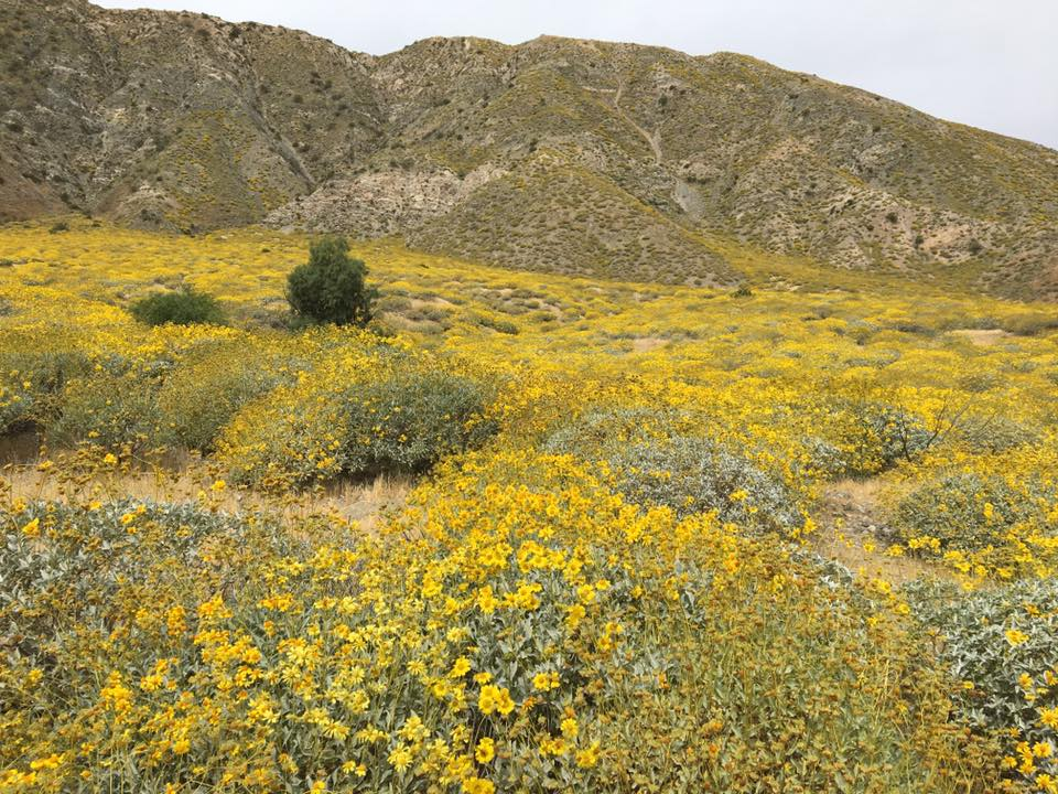 Palm Springs, California, rain, climate change, super blooms, flowers, travel, Leon Kaye, drought