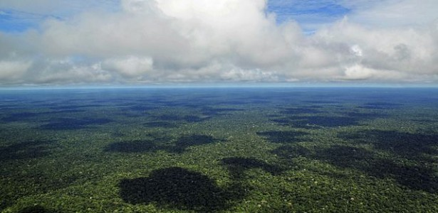 NGOs Accuse Meat and Soy Industries of Worsening Deforestation in Brazil and Bolivia