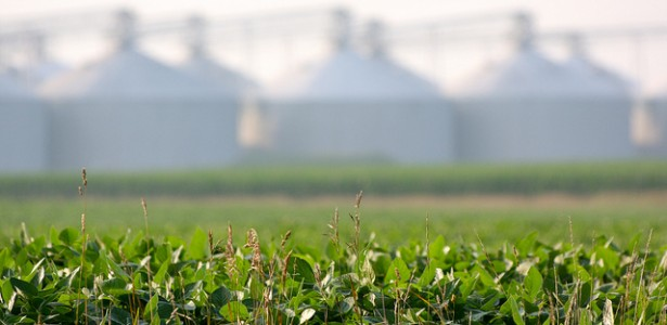 Not-So-Organic Corn and Soy Revealed in Food Companies' Supply Chains