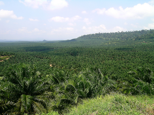 Palm oil, RSPO, sustainable palm oil, Indonesia, deforestation, Greenpeace, Olam, BNP Paribas, Gabon, Leon Kaye, supply chain, sustainable supply chain, PepsiCo, forests