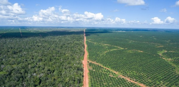 Palm Oil from Alleged SE Asia Deforester Hits the Market – But So Far, No Takers